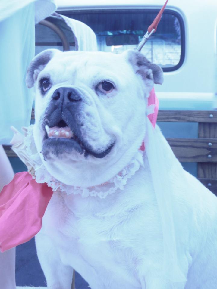 Pearls wedding 039
