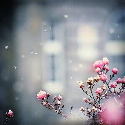 Flower in snow